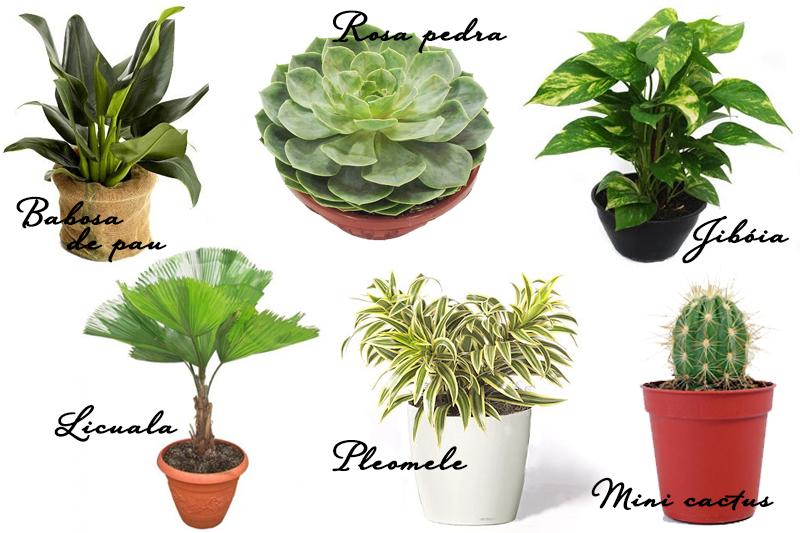 Jardim de inverno como fazer dicas e plantas vida de - Plantas de exterior baratas ...