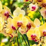 Como Cuidar de Orquídeas — Tudo Que Você Precisa Saber!