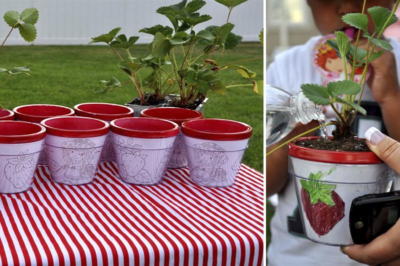 vasos com planta Moranguinho