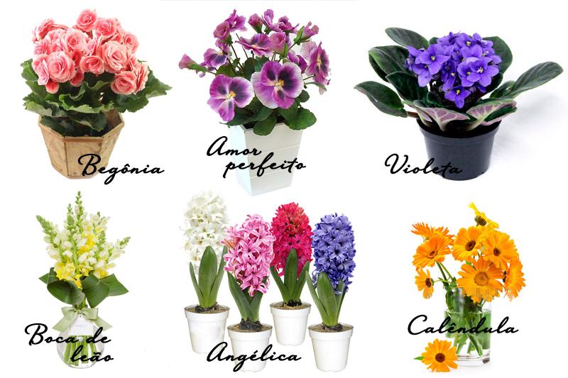 Plantas coloridas jardim de inverno