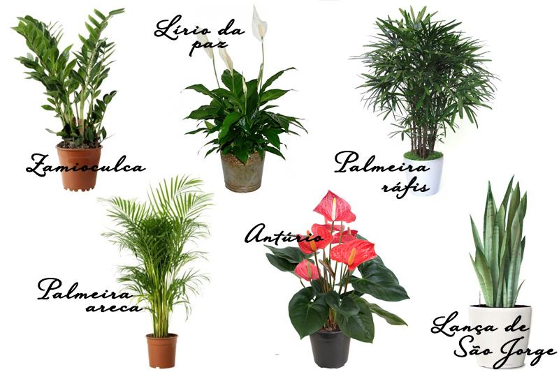 Plantas mais usadas jardim de inverno