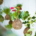 Jardim Suspenso – Ideias, dicas e inspirações!