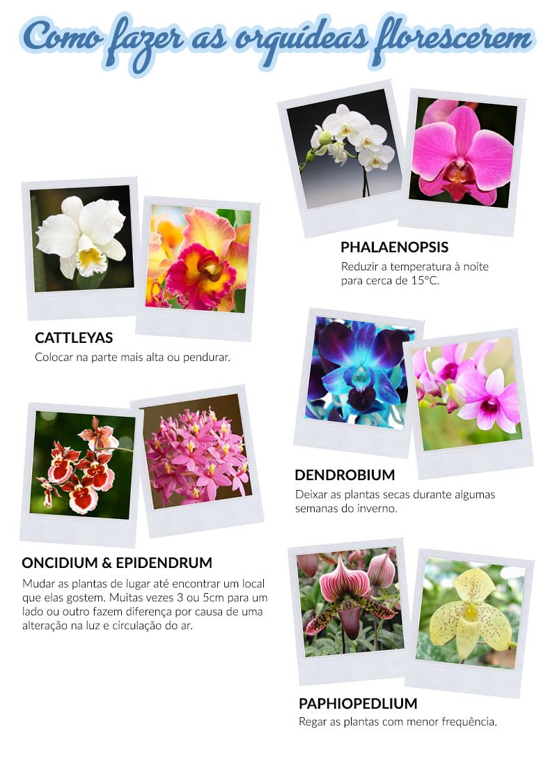 como fazer orquideas florescerem