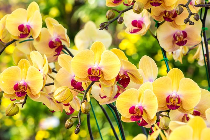 cuidados especias para orquideas