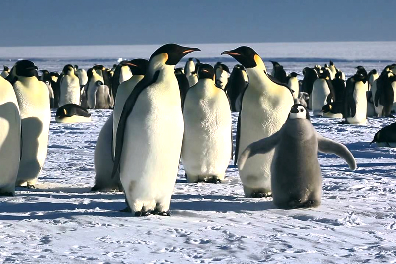documentarios na netflix marcha dos pinguis