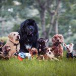Existe raça ideal de cães para apartamentos?